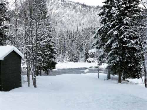 cladelcroix:Entre lac et forêt Trofors Norvège  #winter...