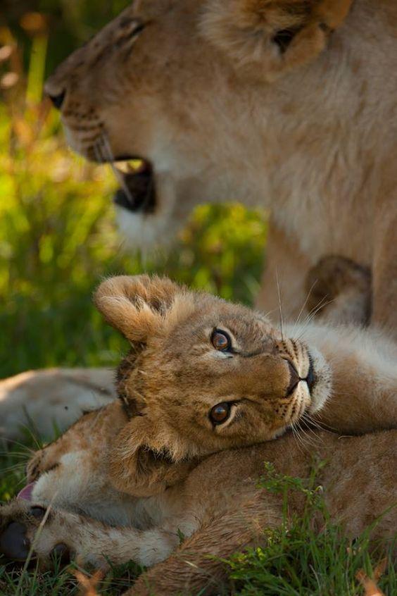 Big Cats Cubs Tumblr