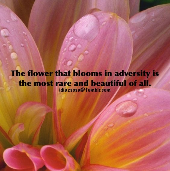 The flower that blooms in adversity... | Flickr - Photo Sharing!