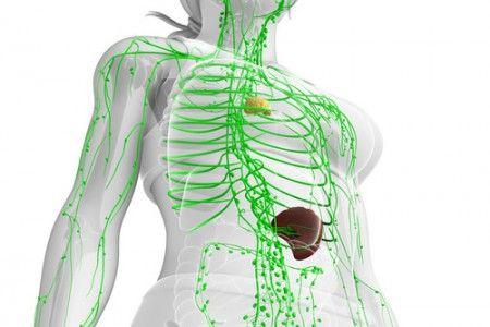 Lymphsystem-Lymphe-Lymphfluss-Entgiftung-Immunsystem-Detox-Heilpraktiker-Berlin