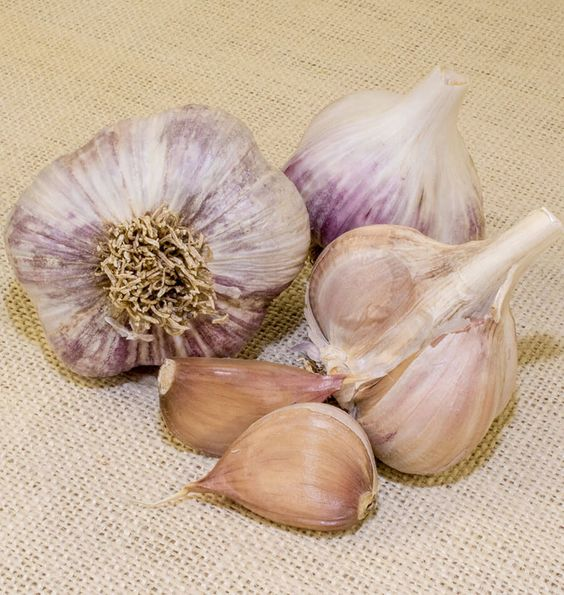 Plant Music Garlic seed in September or October for overwintered garlic bulbs…