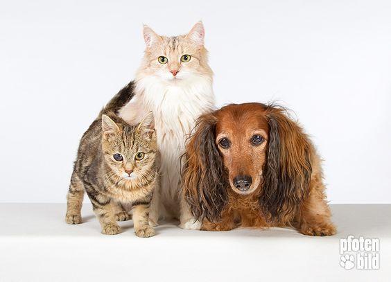 Fotoshooting mit Hund und Katze