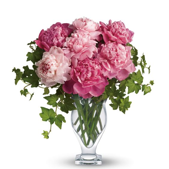 Peonies - Deember flower: