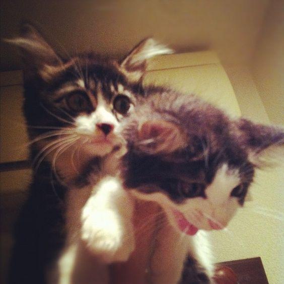 こやつらがいれば~~コワいものなんて逃げてくさ~~! #cat #スパイス兄弟 - @miu_sakamoto- #webstagram