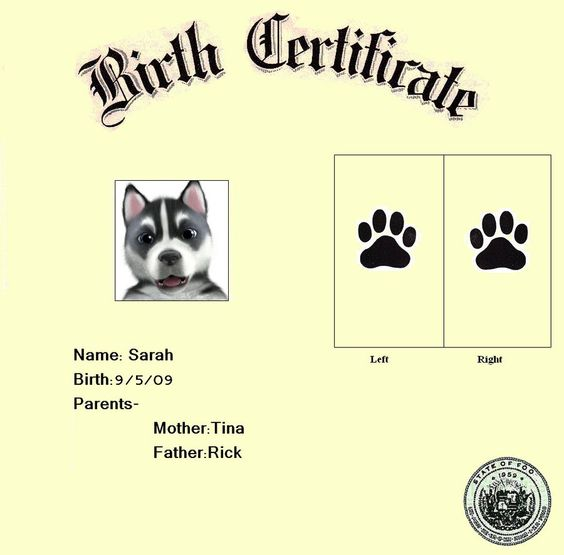 Birth certificate, Births and Pets on Pinterest
