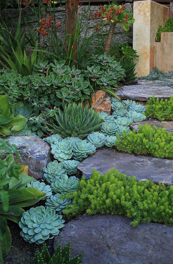 Un giardino di piante grasse! 20 esempi stupendi da cui trarre ispirazione...