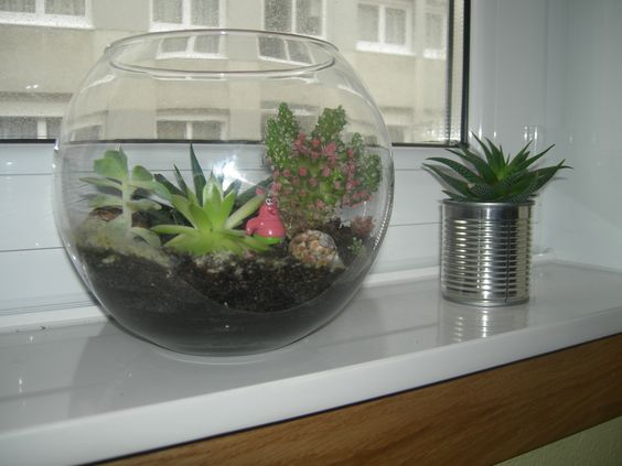Mi pecera de cactus y crasas pecera reciclada en terrario for Peceras de jardin