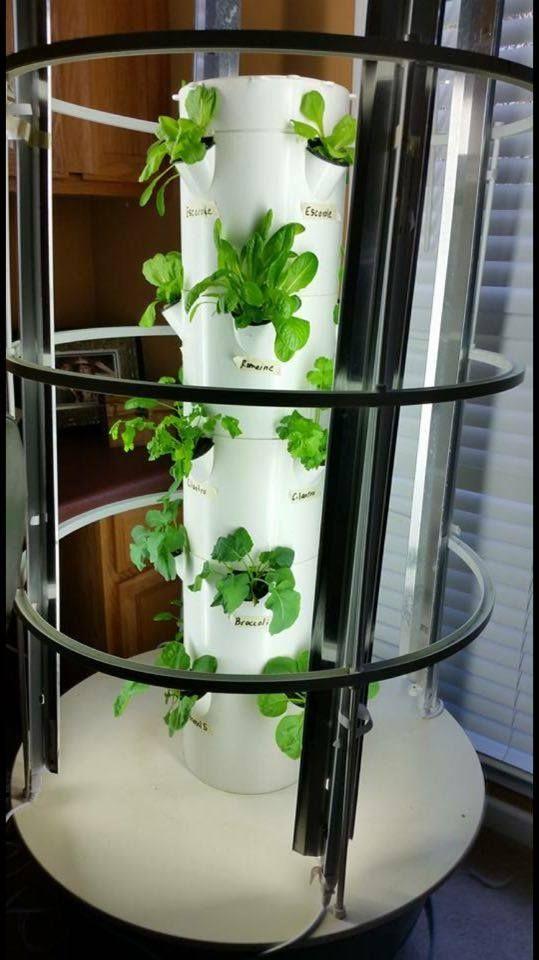 Www Vanniekerk Towergarden Com Grow 365 24 7 Indoor Or Out With The Power Of Vertical Aeroponic Tower Gardening By Juice Pl Tower Garden Hardy Plants Garden