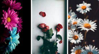 صور ورود جميلة جدا و أحلى خلفيات ورود رومانسية Plants Garden