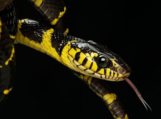 """""""Mangrove Snake IIII"""" by Henrik Vind  #500px"""