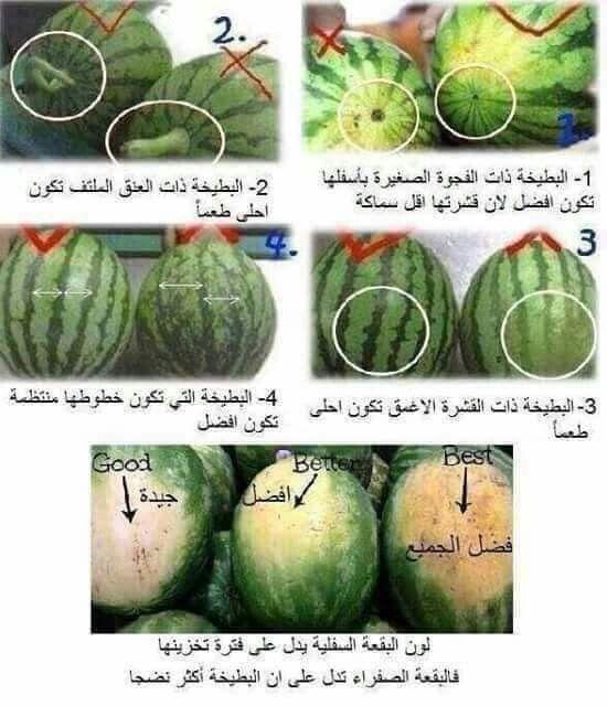 البطيخ Health Facts Food Food Medicine Food Garnishes
