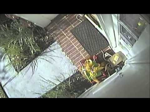 FedEx dropped off an iPad mini a dad got for his daughter for Christmas. UPS Grinch guy came and stole it. UPS denied the claim, until they realized the dad caught it all on tape.