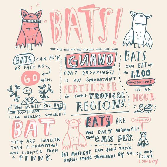 BAT FACTS!! #randomillustratedfacts #sketchbook #bats