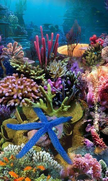 Azulejos pegatinas azulejos imagen bajo agua con corales y peces
