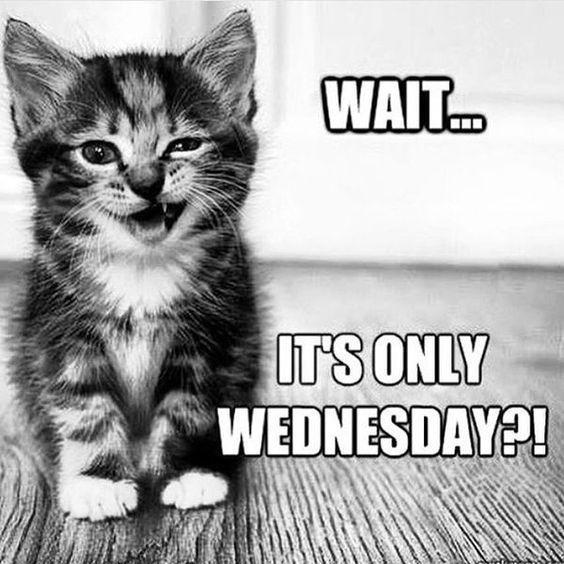 Happy Wednesday Wednesdayfunny Funny Wednesday Memes Wednesday Memes Funny Wednesday Quotes