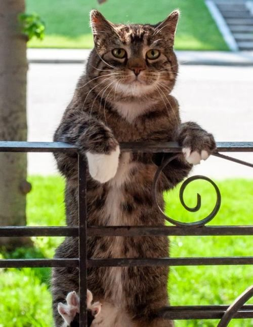 #hicrazycat