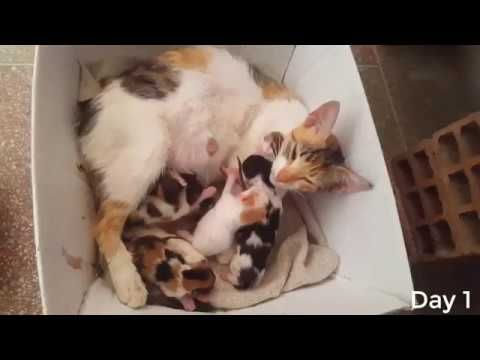 Street Cat Gives Birth To 6 Kittens Labor Etc 2 Kittens Died