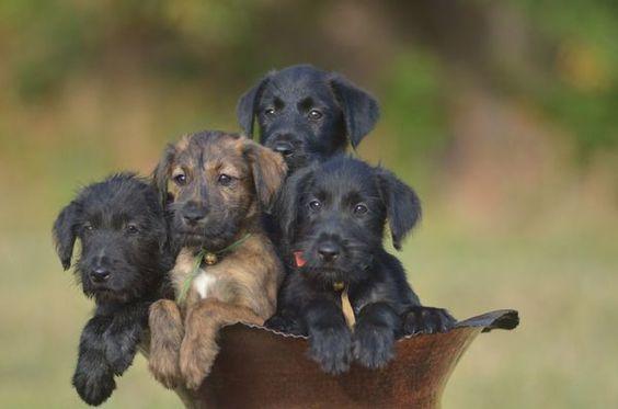 Annonce chien, chiot, Toulon (83200) - WA150597353