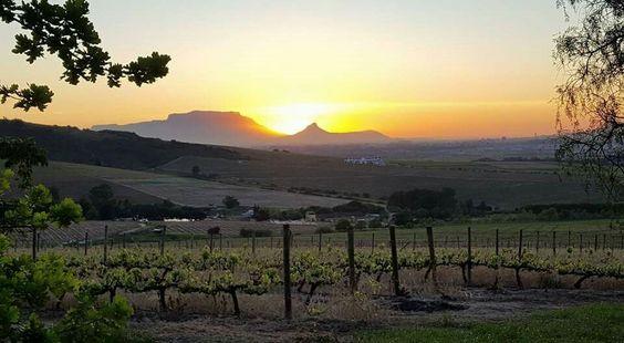 Kaapzicht Wine Estate SA