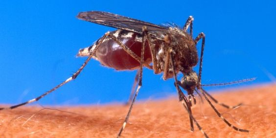 FACT: Over 1 million people die from mosquito-borne diseases every year, and hundreds of millions more experience pain and suffering from illnesses transmitted by mosquitoes.