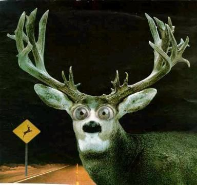 Image result for deer in the headlights looking at a woman