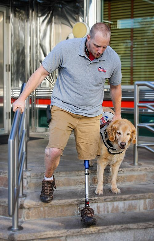 The Service Dog Programs Of America S Vetdogs Were Created To