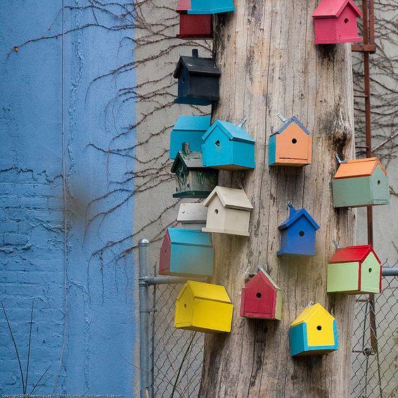 birdie house community