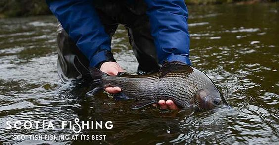 Grayling are an awesome species - I've caught this fish before about 3 years previously in the same pool. So did my friend and a client last summer! #catchandrelease #flyfishing #looplife #loopscotland #temolo #ombre #grayling #scotland by scotia_fishing