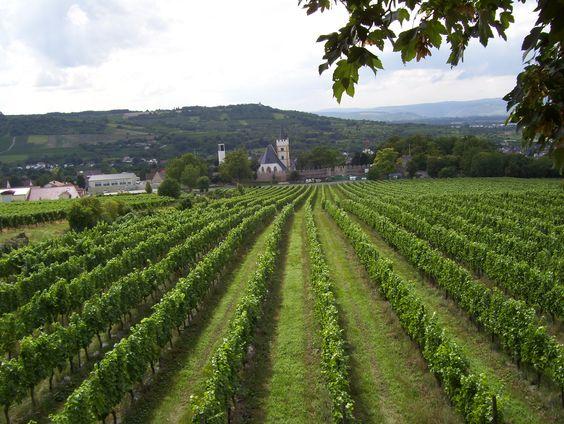 Vinegard-in-Ingelheim.