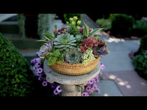 How To Create Height In A Succulent Arrangement Garden