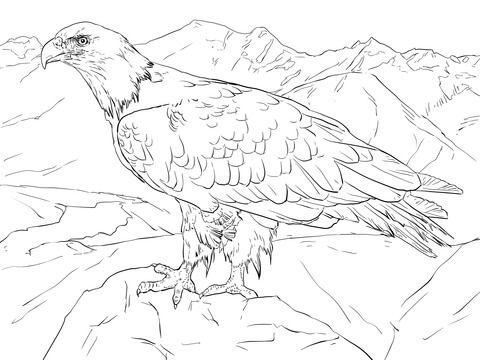 Weißkopfseeadler aus Alaska Ausmalbild