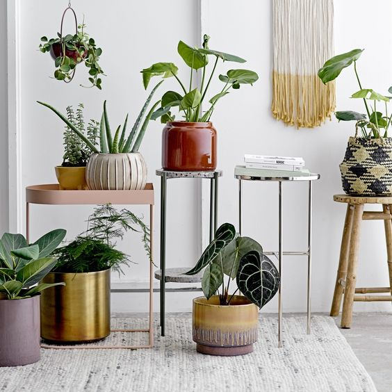 Assortiment de plantes style jungle urbaine moderne