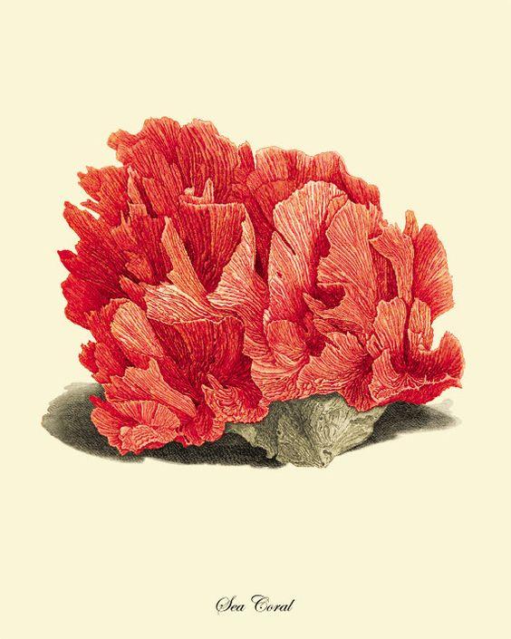 Bathroom Wall Art Canvas Artwork Nautical Coral Reef Ocean: Red Sea Coral Art Print Vintage Prints Old Prints Nautical