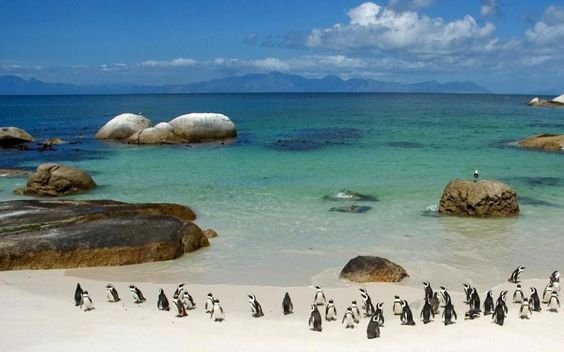 Boulders beach, Cape Town South Africa. Lovely place. Penguins are remarkably comfortable around people, though fortunately not tame.