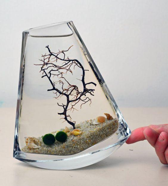Marimo terrarium japanese moss ball aquarium flat for Aquarium vase decoration