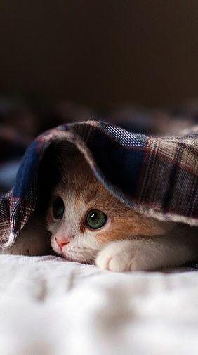 ボード 子猫 のピン