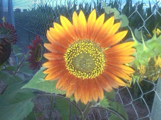 Flores en la huerta