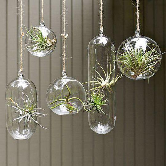 hanging garden ;)