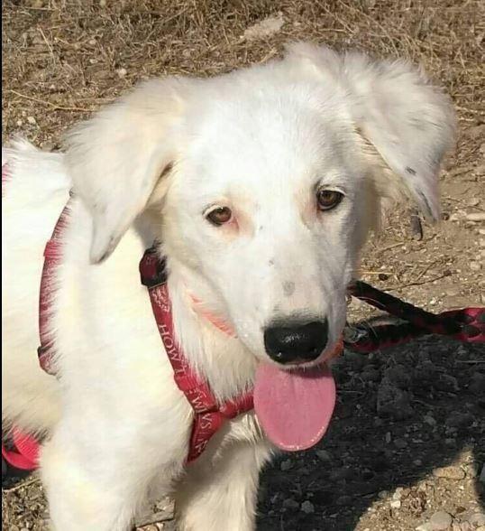Belinda Auf Der Suche Nach Einer Liebevollen Familie Mischlingshunde Hunde Tierheim Hunde