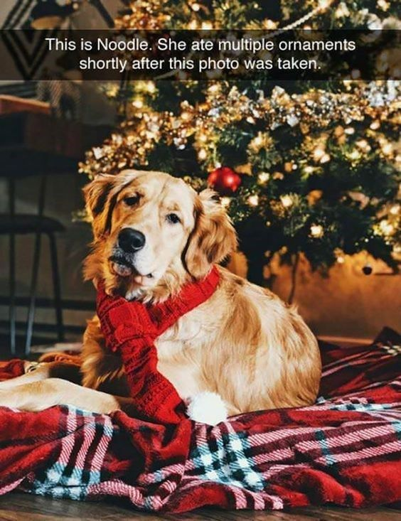 23 Holiday Animal Memes As A Forewarning Of What S To Come And To Bring You Joy Obviously Day 23 Funny Animal Memes Funny Animals Animal Memes