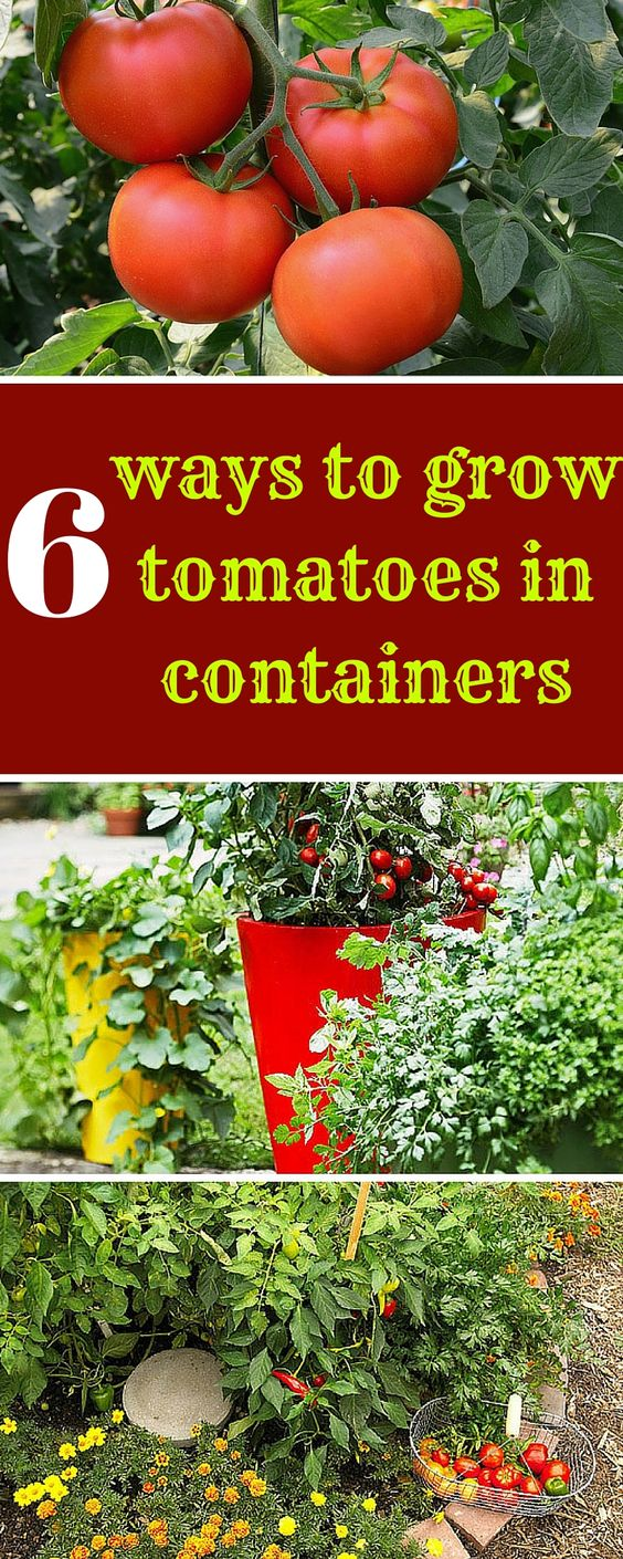 The O Jays Growing Tomatoes And Small Spaces On Pinterest 400 x 300