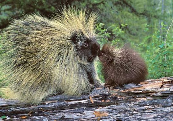 Meet 25 of the Best Animal Moms and Their Babies on the Internet. Insanely Cute! | Trending Monkey
