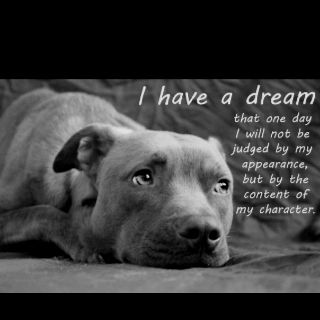 It's so sad how some people don't like staffs and pit bulls I have one and the biggest muscle is their heart ❤️