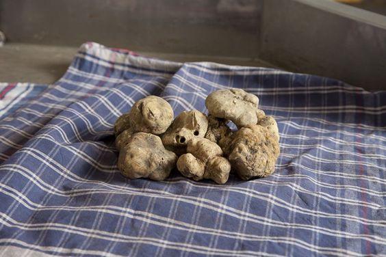 truffles. italy  http://www.nowness.com/day/2011/11/16?ecid=ema1593&CID=