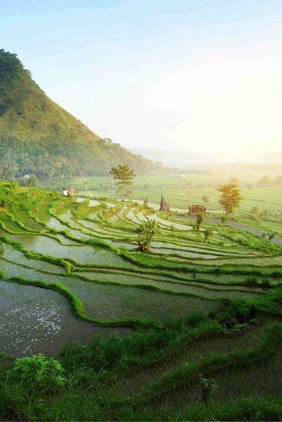 Bali is waanzinnig mooi! Struin door de prachtige groene natuur, loop langs de rijstvelden en droom weg op een van de prachtige stranden! Alles is hier eigenlijk mooi! Om het allemaal nog extra mooi te maken verblijf jij in een luxe 5***** hotel! Dit is echt een droomreis, dus het enige wat jij nog hoeft te bedenk is met wie jij deze reis zou willen maken! Pak je koffer en maak iedereen in je omgeving jaloers! https://ticketspy.nl/deals/waanzinnig-bali-en-5-droomreis-va-e982/