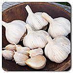 Organic Spanish Roja Garlic