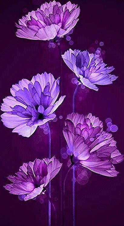 Super Flowers Background Tumblr Purple Ideas In 2020 Flower Phone Wallpaper Flower Iphone Wallpaper Flower Wallpaper