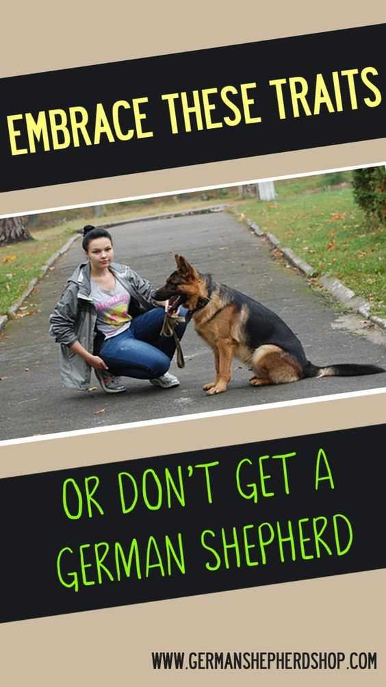 Embrace These Traits Or Don T Get A German Shepherd German