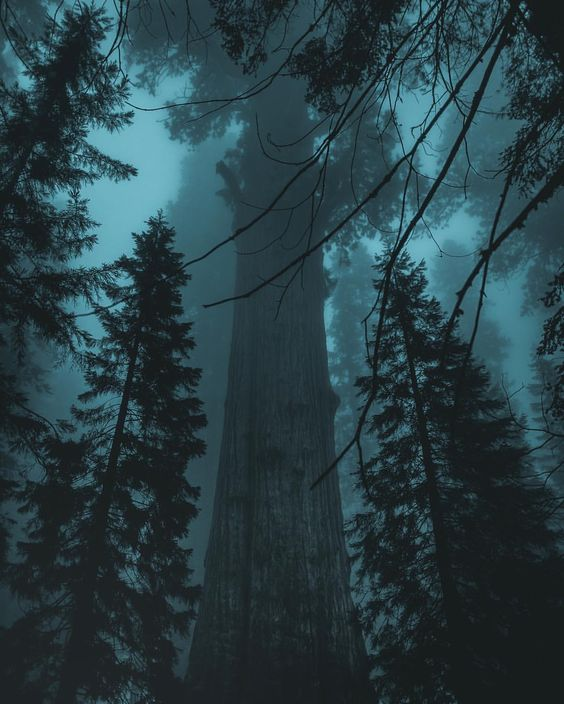 Breathtaking Moody and Mysterious Forest Photography by Dylan Furst #photography #forest #nature #travel #instagram
