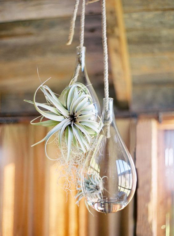 Hanging wedding Decor - Terrarium wedding decor ideas